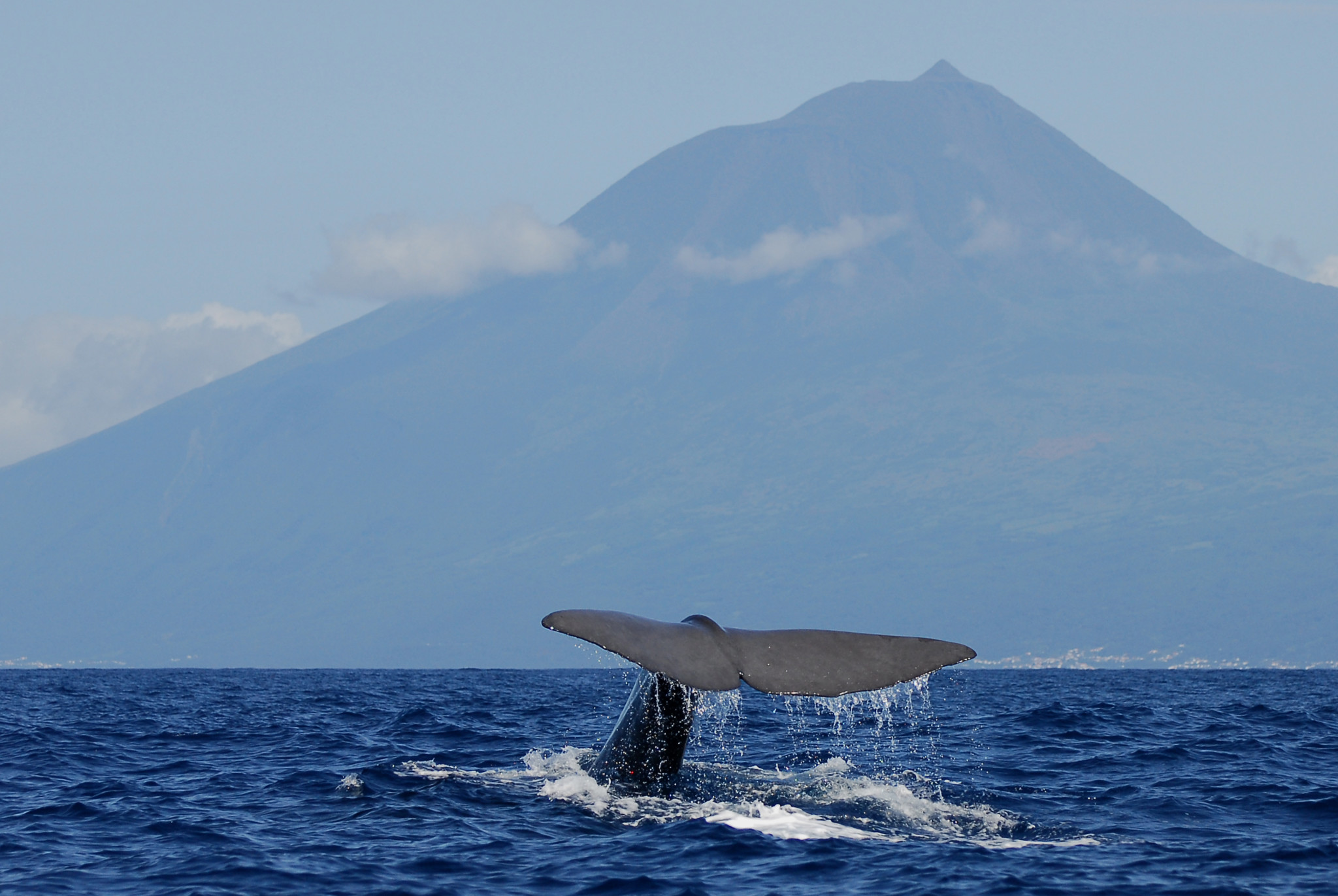5) Whale Watching